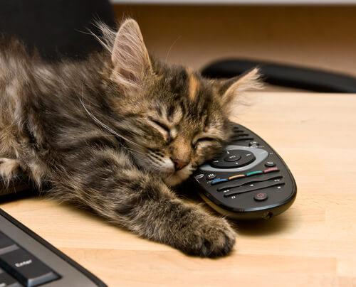 Кошки воспринимают энергию людей?