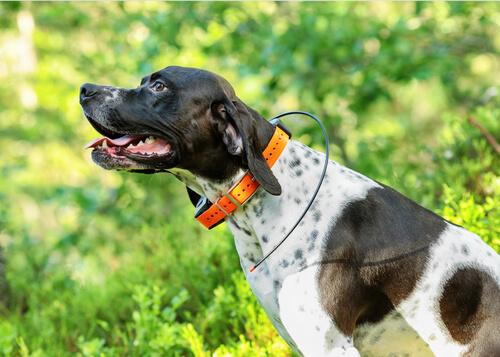 Знай GPS локаторы для собак