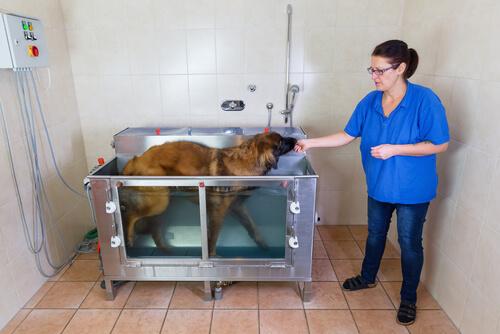 Beneficios de la hidroterapia para perros