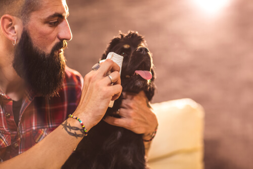 Как почистить глаза собаки