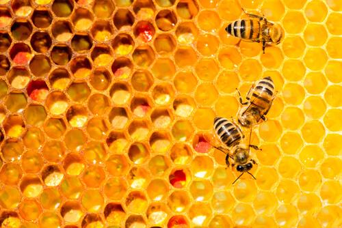 Loque americana en abejas