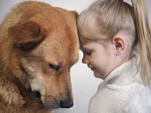 Понимают ли собаки выражение лица человека?