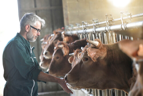 El peligro del MMS en veterinaria
