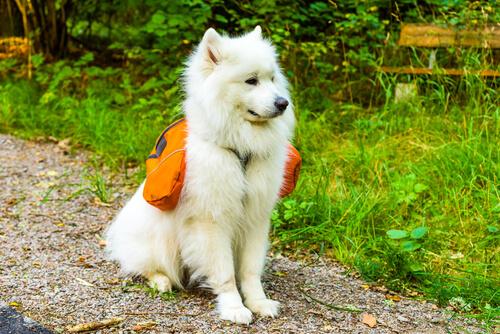 4 совета, чтобы выбрать лучший рюкзак для собак