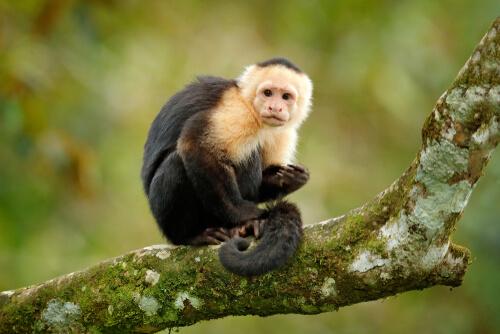 ¿Son éticos los monos de terapia?