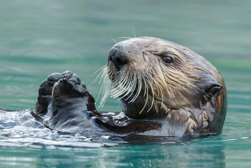 Nutria marina: hábitat