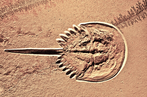 Organismos pancrónicos, los que se niegan a desaparecer