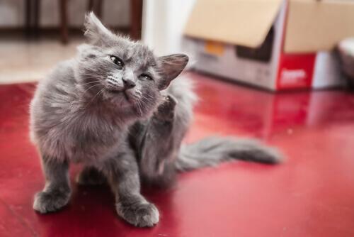 Parásitos en perros y gatos