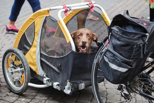 Велотрейлер для выгула собак