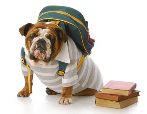 Perro con mochila