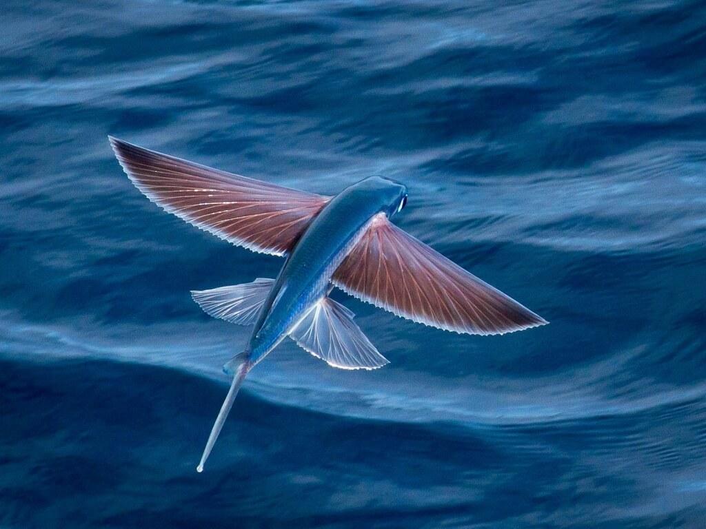 curiosidades del mundo marino