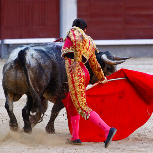 Por qué los toros van al capote