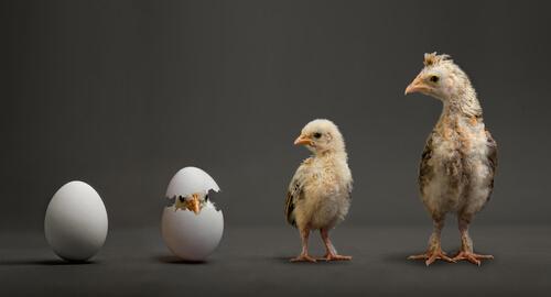 Qué animales pueden ser clonados