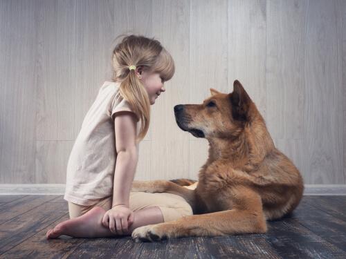 Qué es la socialización en un perro