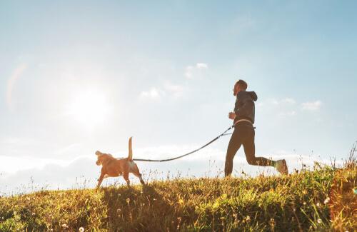 Razas de perros para correr