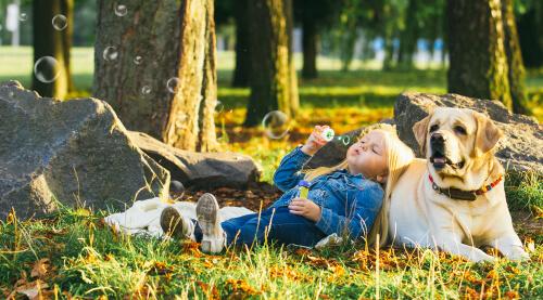 5 razas de perros tranquilos