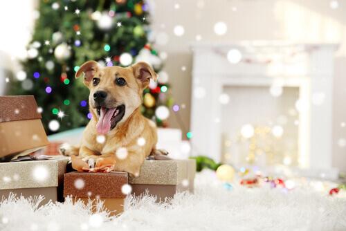 Regalo de un animal en Navidad