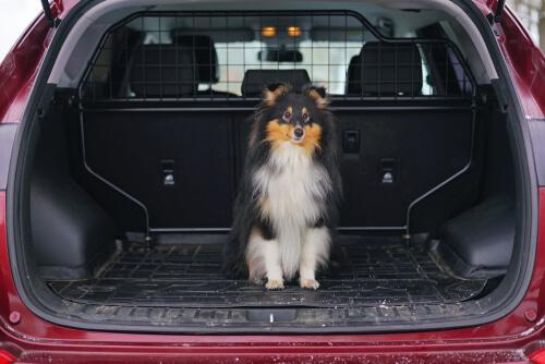 Rejas separadoras para perros de coche