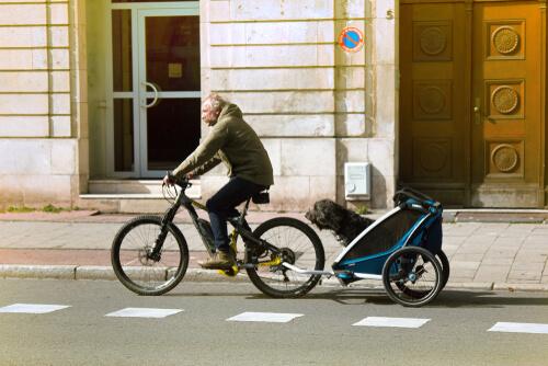 Remolque de bici para perros