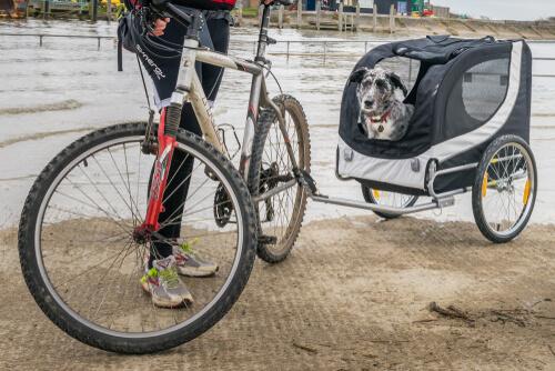 Remolque de bicicleta para pasear tus perros