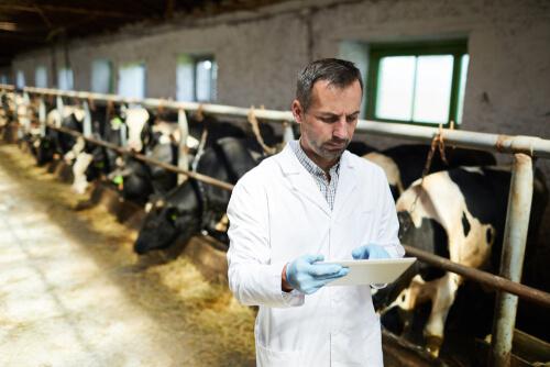 Las resistencia a antibióticos y la ganadería