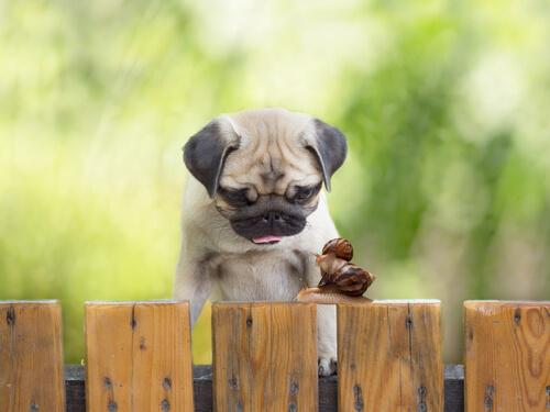 Вегетарианское питание для вашей собаки