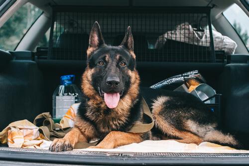 Separador para perros en coche