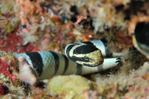 Serpiente marina: mito