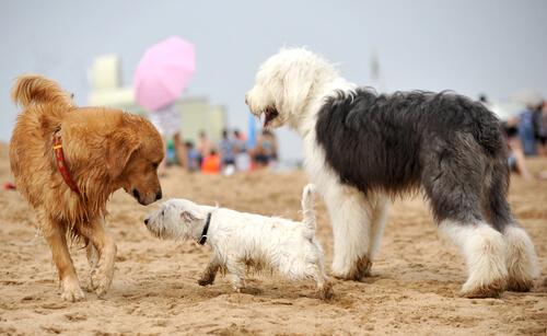 Cómo socializar a tu cachorro para que tenga un buen comportamiento