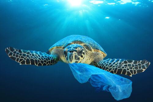 Tortuga marina: amenazas