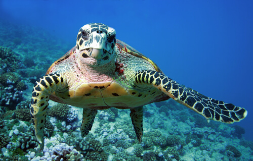Características de la tortuga marina