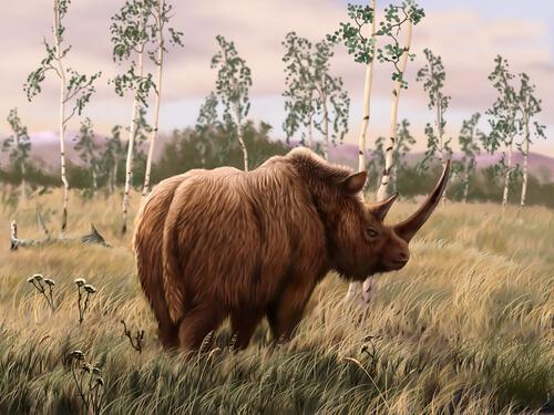 Unicornio siberiano: extinción