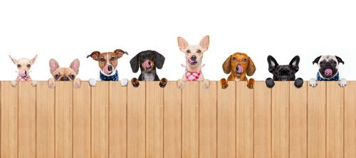 Как выбрать заборы и ограждения для собак в вашем доме