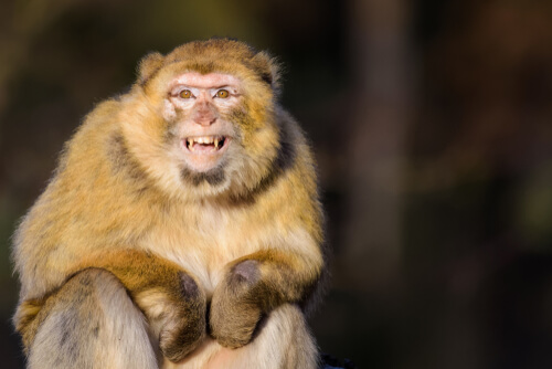 A los monos les molestan los turistas