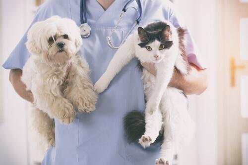 Antibióticos para animales