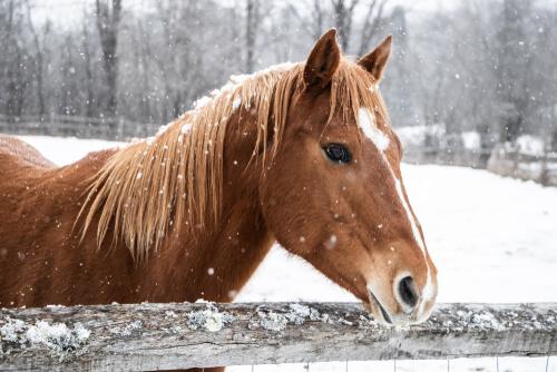 Cuidar tu caballo en invierno