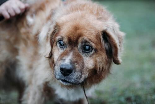 Síntomas y tratamientos de cataratas en perros