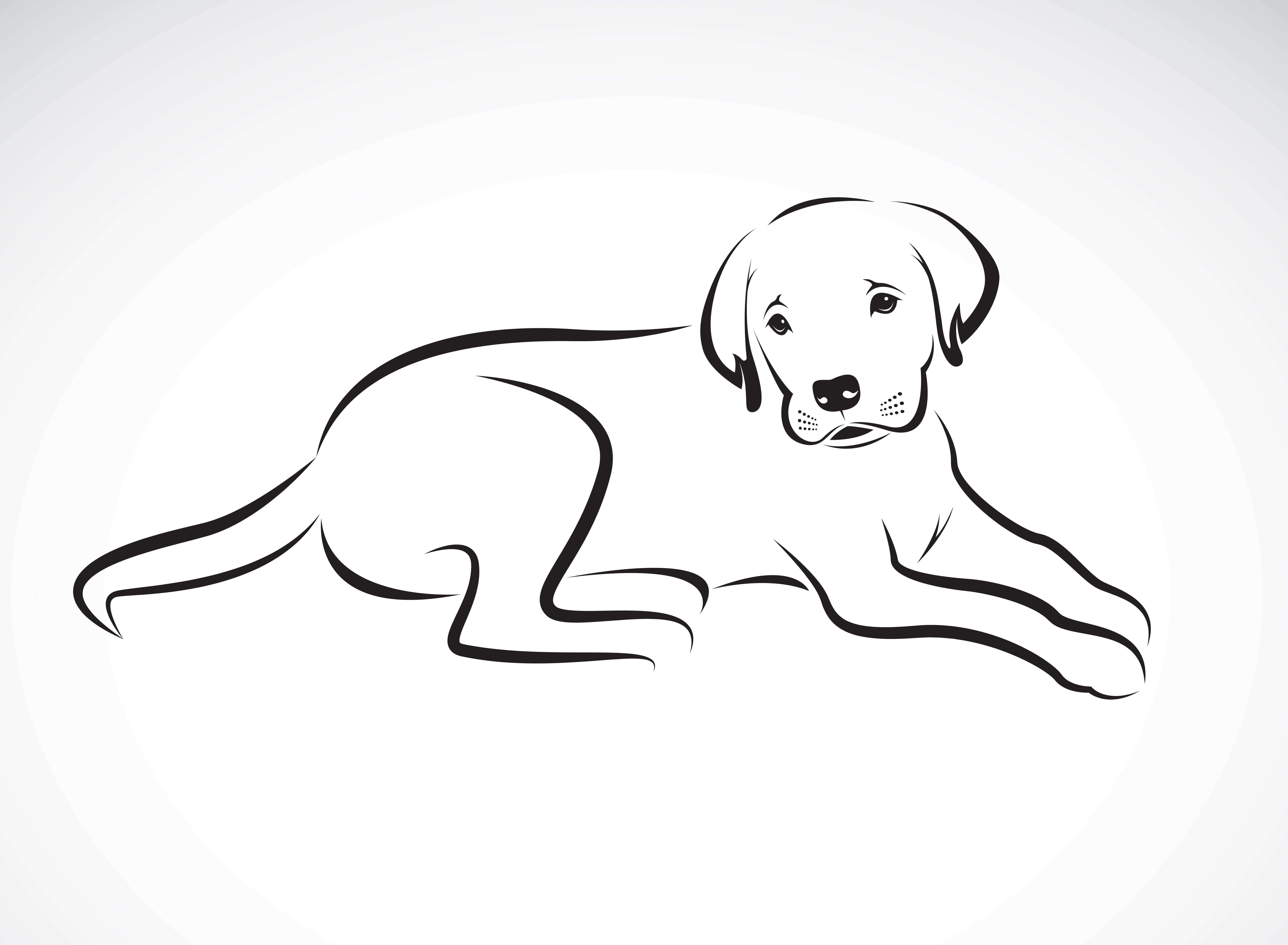 Cómo pintar a tu perro