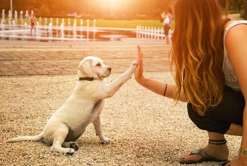Comportamiento de los perros