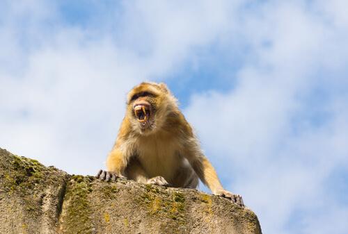El mono que atacó al rey Alejandro I