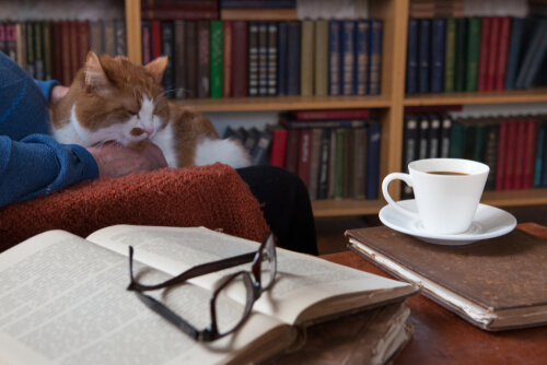 Escritores que tienen gatos