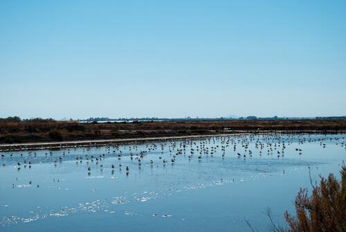 Especies de aves en Doñana