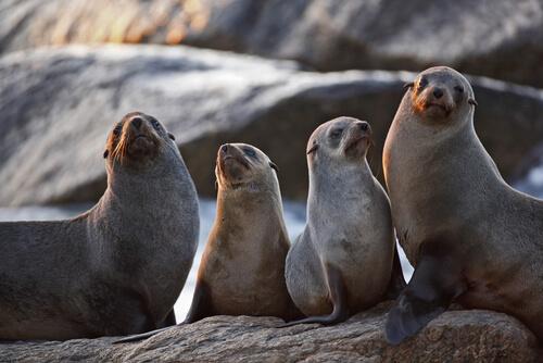 Características de la foca moteada