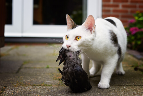Gato caza pájaro