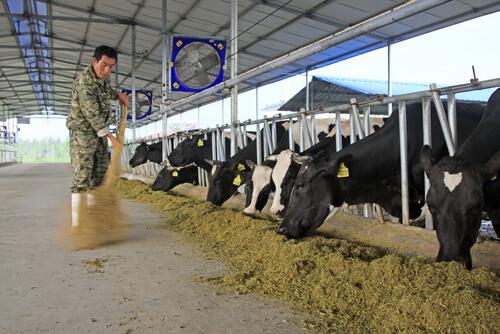 Higiene y seguridad en la ganadería