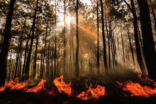 Incendios forestales: causas
