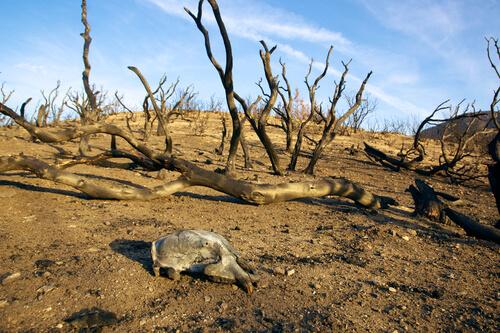 Incendios forestales: efectos