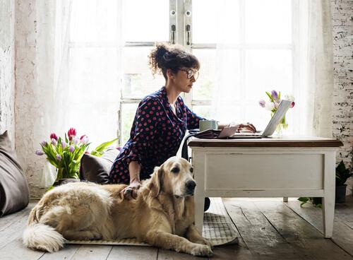 Кампилобактерная инфекция присутствует у собак