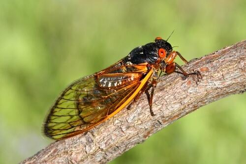 Самые уродливые насекомые в мире