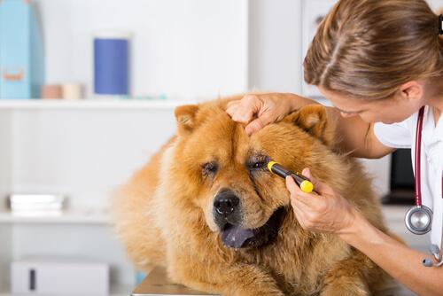 Как обнаружить первые признаки заболевания у собак